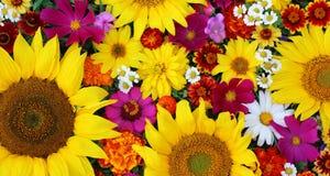 花卉背景,顶视图 不同的花的纹理 免版税库存图片