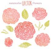 花卉背景,水彩绘画 图库摄影