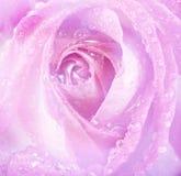 花卉背景-上升了 免版税库存照片