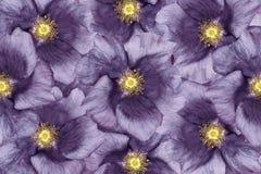花卉背景紫色花 花卉拼贴画 背景构成旋花植物空白花的郁金香 特写镜头 库存图片