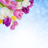 03花卉背景 图库摄影