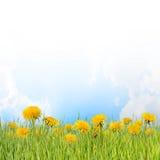 05花卉背景 免版税库存照片