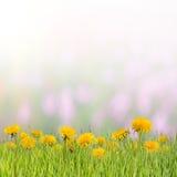 06花卉背景 免版税库存图片