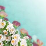 08花卉背景 库存照片