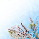 12花卉背景 图库摄影