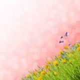 13花卉背景 免版税库存图片