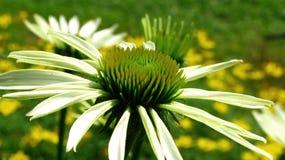 花卉背景 图库摄影