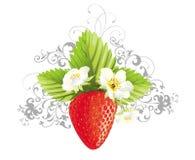 花卉花例证草莓 免版税图库摄影