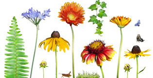 花卉花园 免版税库存照片