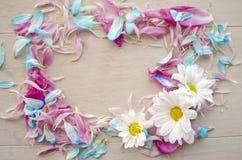 花卉花圈框架顶视图与蓝色和桃红色瓣的在与自由空间的木背景文本的 库存照片