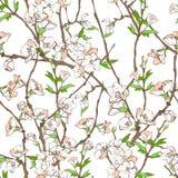花卉花纹花样 图库摄影