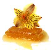 花卉花蜂蜜蜂窝 免版税库存照片