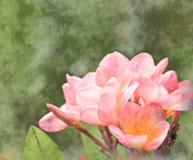 花卉花grunge粉红色 免版税图库摄影
