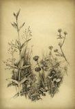 花卉草图 皇族释放例证