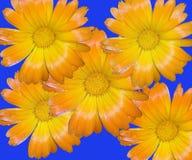 花卉蒙太奇 库存图片