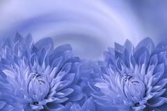 花卉蓝色美好的背景 开花在青白的背景的蓝色大丽花 2007个看板卡招呼的新年好 背景构成旋花植物空白花的郁金香 免版税库存图片