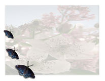 花卉蝴蝶 库存照片
