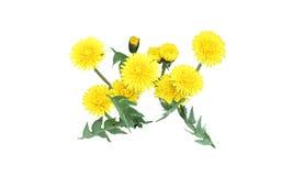 花卉装饰元素 库存照片