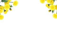 花卉装饰元素 免版税库存照片