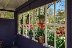 花卉装饰窗口 免版税图库摄影