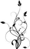 花卉设计要素 库存照片