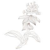 花卉设计,向量例证 免版税库存图片