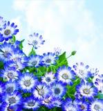 花卉边界雏菊 免版税图库摄影