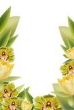 花卉边界 库存图片