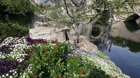 花卉迪斯尼 库存照片