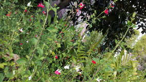 花卉迪斯尼 库存图片