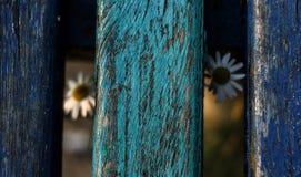 花卉长凳 免版税库存照片