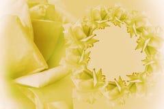 花卉黄色白的美好的背景 背景构成旋花植物空白花的郁金香 黄色框架开花在轻的背景的玫瑰 罗斯clos 库存图片