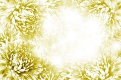 花卉黄色白的美好的背景 背景构成旋花植物空白花的郁金香 黄色白的花翠菊框架在白色背景的 库存图片