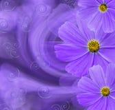 花卉紫色美好的背景 背景构成旋花植物空白花的郁金香 与雏菊紫罗兰色花的明信片在紫色背景的 免版税库存图片