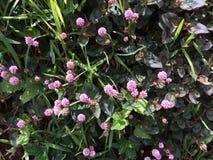花卉 免版税库存图片