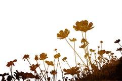 花卉 库存照片
