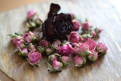 花卉 图库摄影