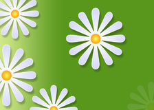 花卉 免版税图库摄影