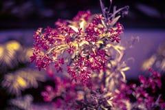 花卉bokeh背景 自然明亮的色的墙纸 被弄脏的背景 向量例证