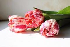 花变粉红色三 库存照片