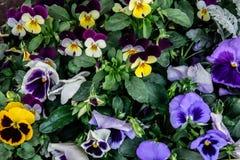 花可爱和精美地五颜六色的混合物  免版税库存图片