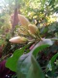 花叶子和阳光秋天在所有植物 免版税库存照片