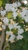 花叶子颜色开花的场面 库存图片