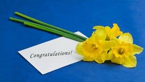 水仙花和一个信封在蓝色背景 免版税库存图片