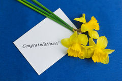 水仙花和一个信封在蓝色背景 免版税库存照片