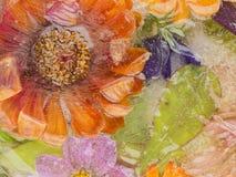 花和叶子在冰 库存照片