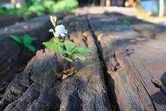 花和叶子在户外硬木 库存照片