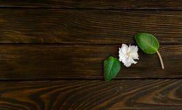 花和叶子在棕色木头 免版税图库摄影