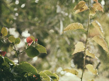 花和叶子的减速火箭的照片在蜘蛛网 免版税库存照片