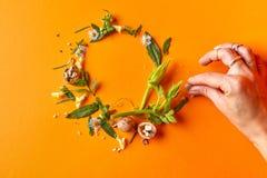 花和叶子美好的框架  免版税图库摄影